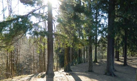 пешеходная экскурсия по Шуваловскому парку